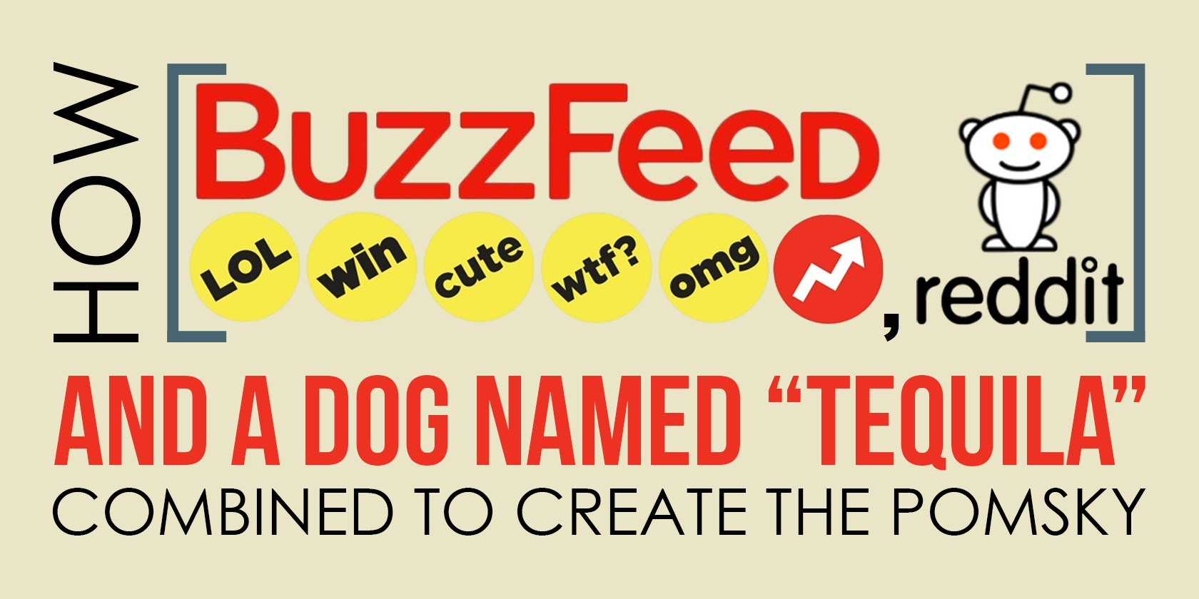 How Buzzfeed, Reddit, and a Dog Named Tequila Combined to